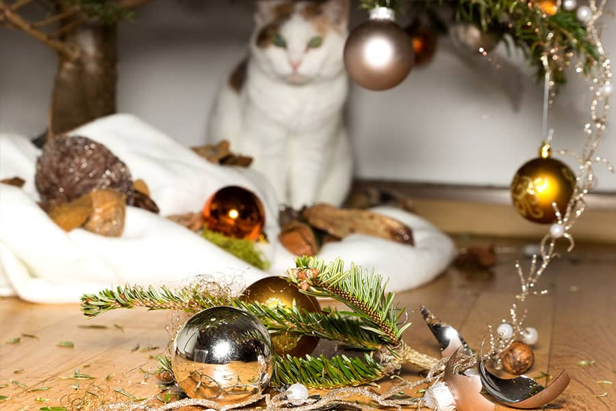 Top 5 Christmas Holiday Pet Hazards - Decorations